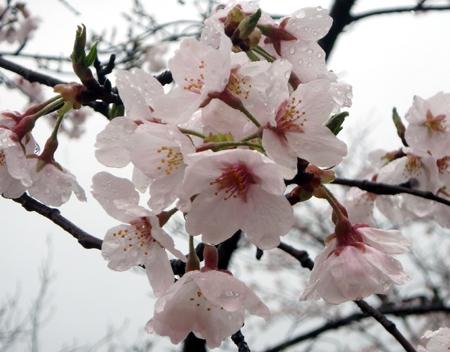 29_04_09 東雲公園