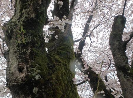 29_4_9 東雲公園 4
