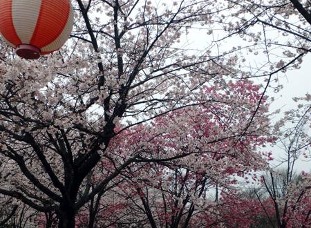 29_4_9 東雲公園 5