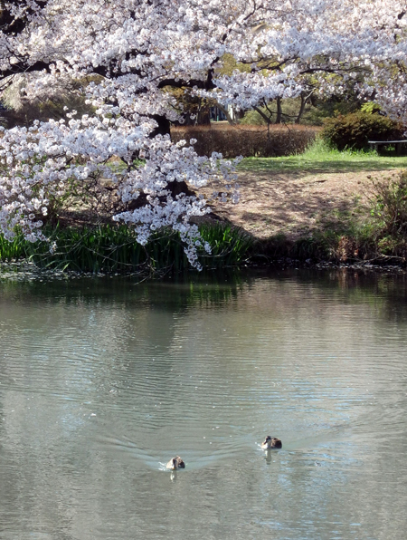 29_4_16 群馬10・敷島公園