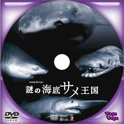 謎の海底サメ王国