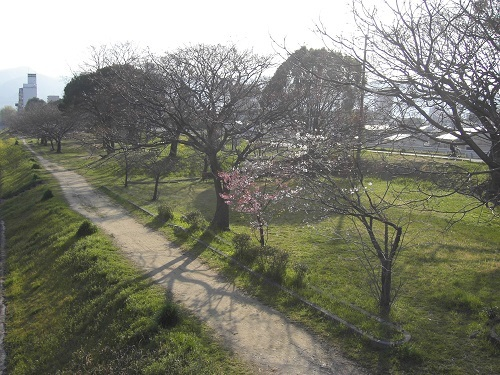 20170406_石手川公園