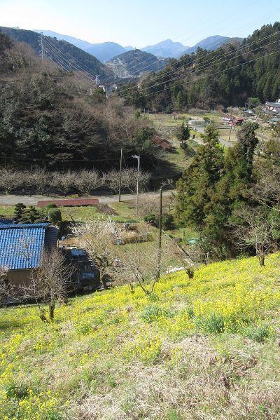 尺里から箱根の山を望む