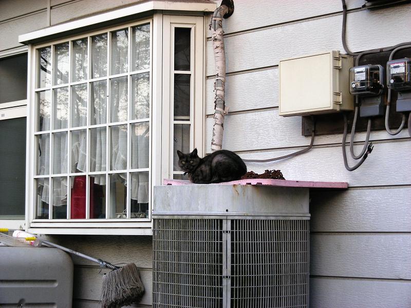 民家前室外機の猫1