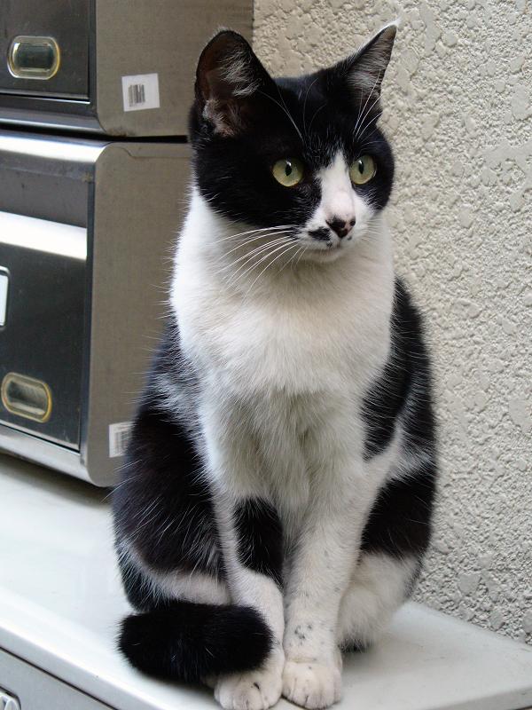 室外機に座ってた黒白猫1