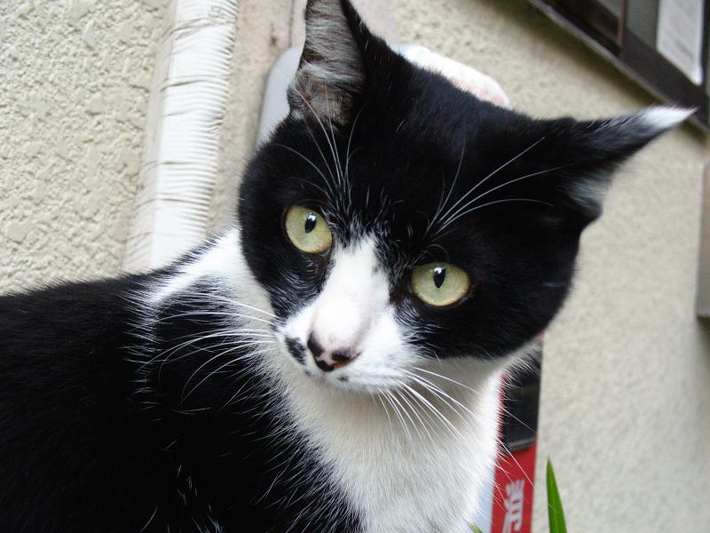 室外機に座ってた黒白猫2