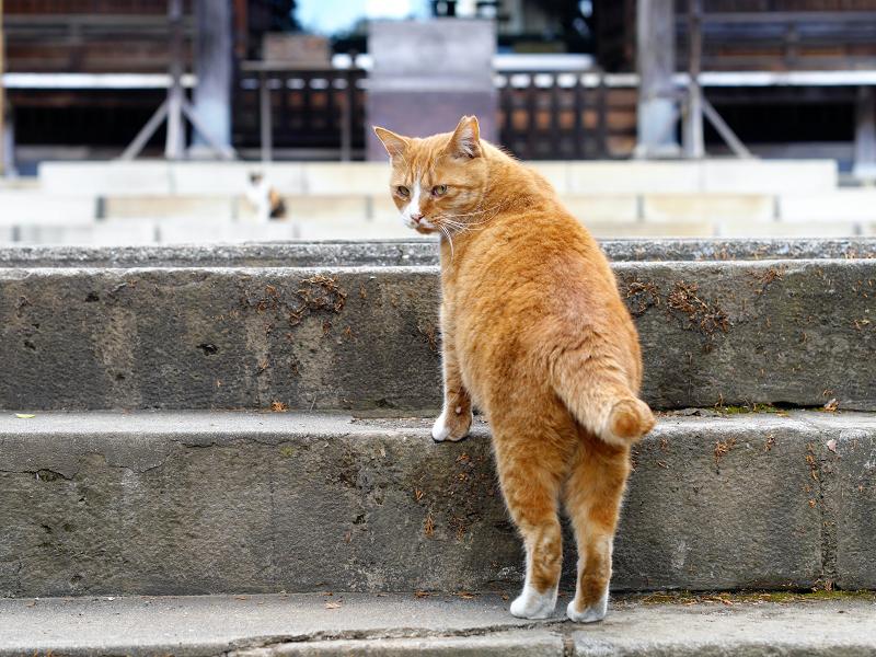 本殿参道の猫たち3