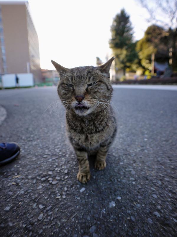 境内の寄り目猫2