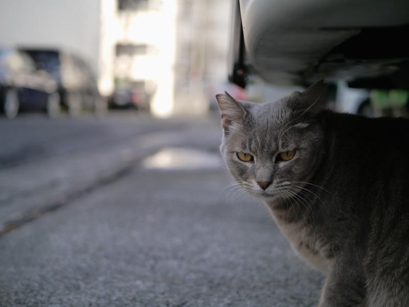 車後部下の猫1