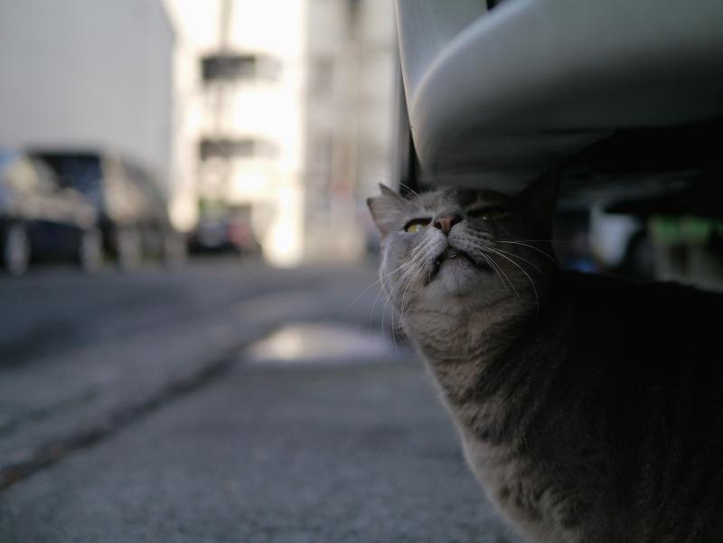 車後部下の猫2