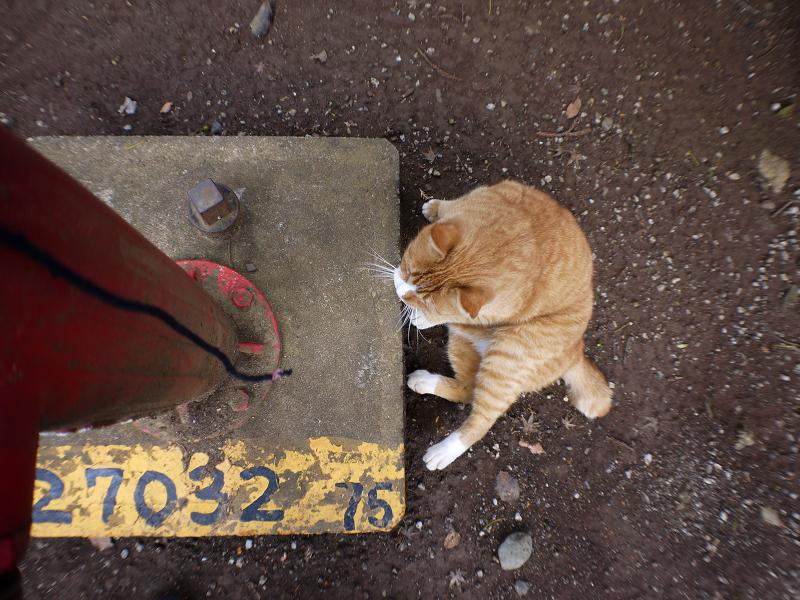 境内消火栓の茶白猫2