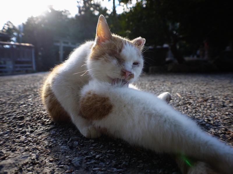 境内で毛づくろい猫1