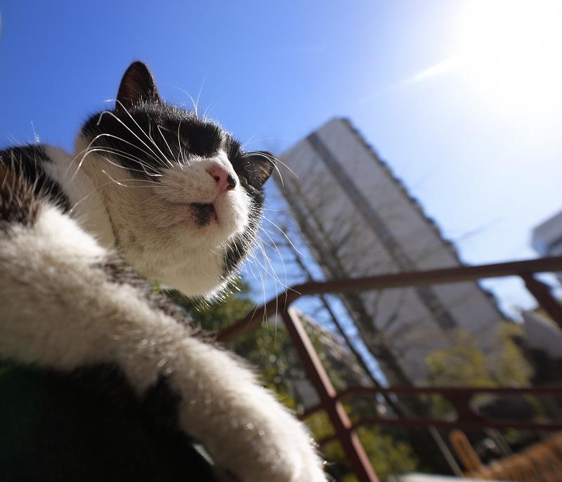 冬青空と黒白猫2