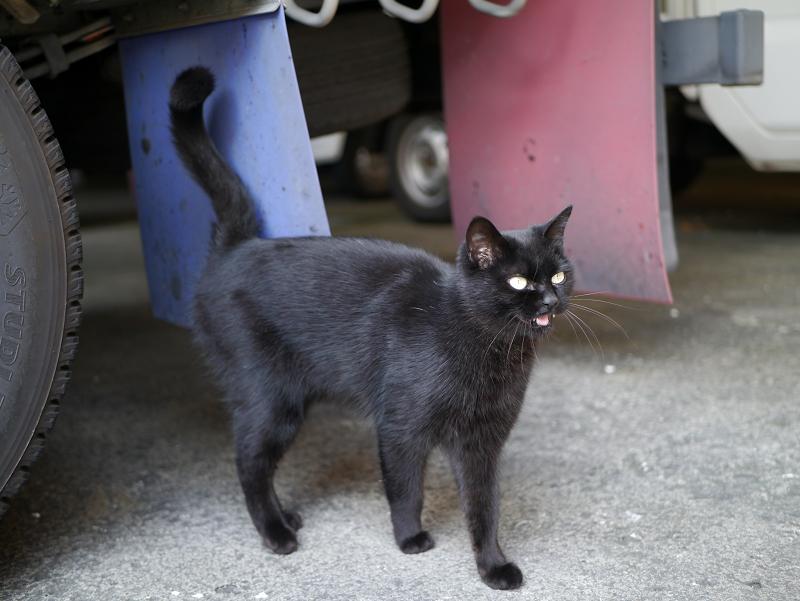 駐車場でベロを出した黒猫1