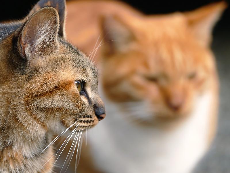 若手猫の横顔1