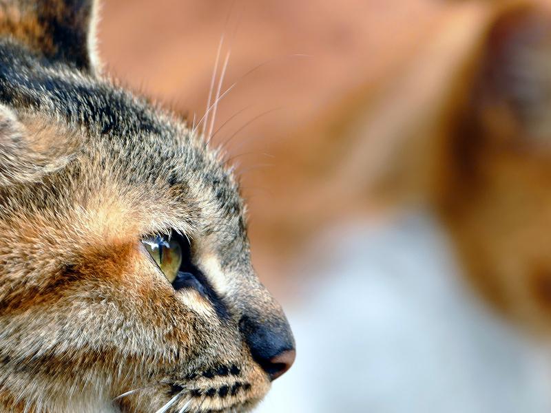 若手猫の横顔2