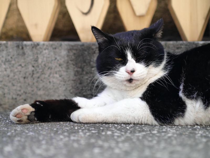 クールダウン中の黒白猫