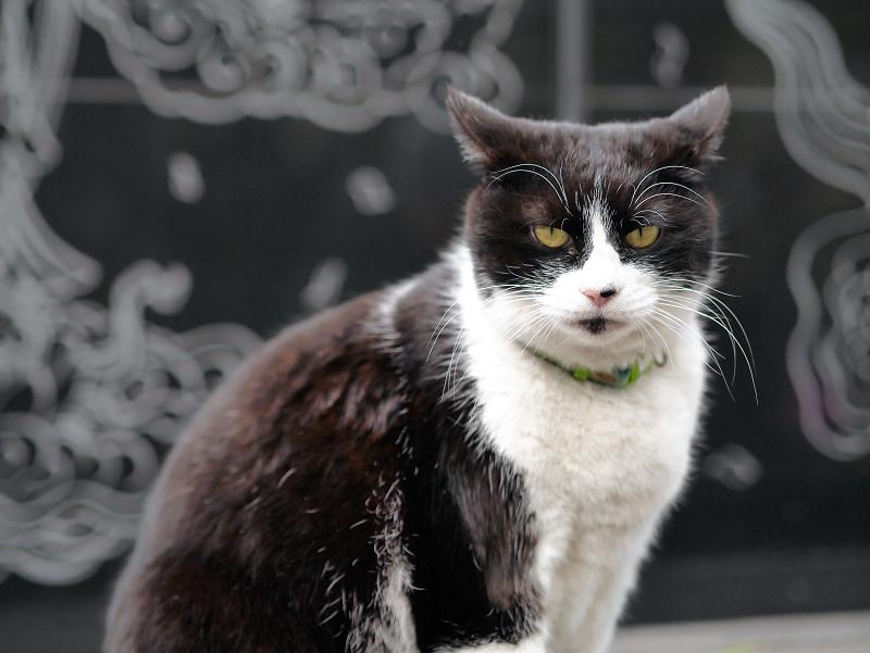 黒御影石の前の黒白猫1