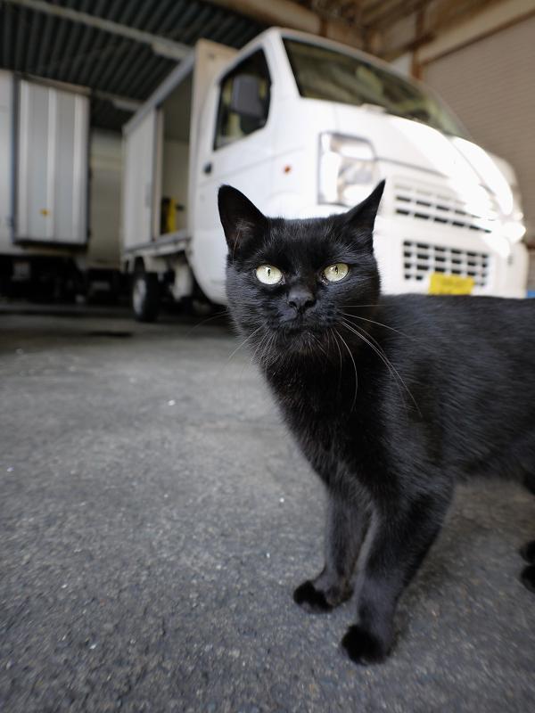 レンズに近づいてきた黒猫1