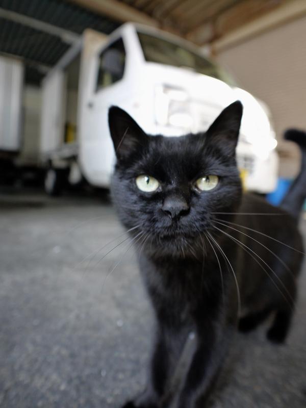 レンズに近づいてきた黒猫2