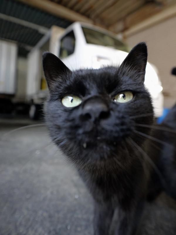 レンズに近づいてきた黒猫3