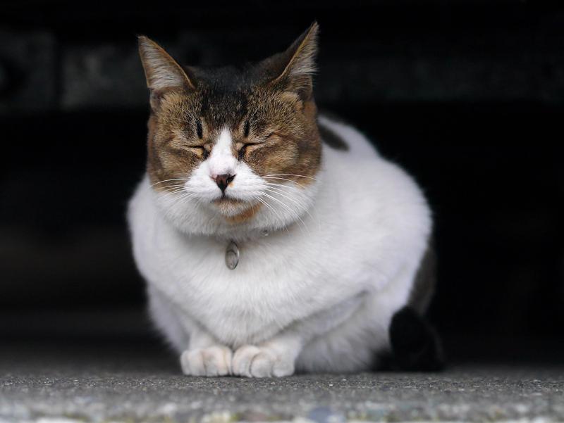 車の下に佇んでいるキジ白猫2
