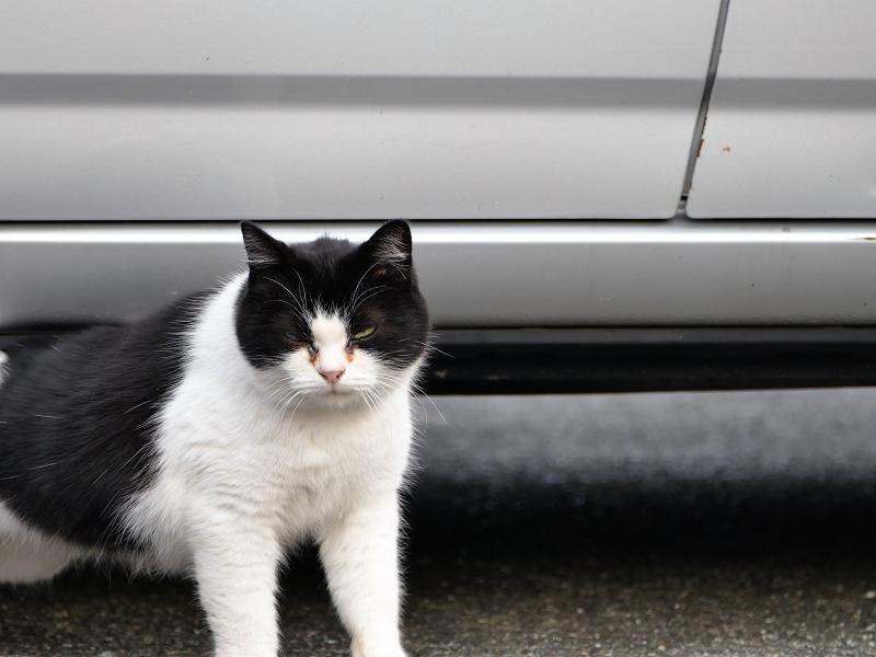 駐車場車下の白黒猫3