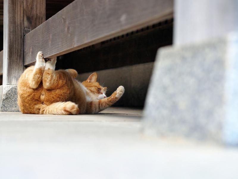 まだまだ大騒ぎしてる茶白猫3