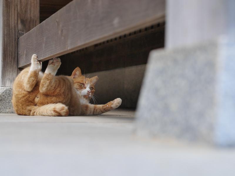 まだまだ大騒ぎしてる茶白猫4