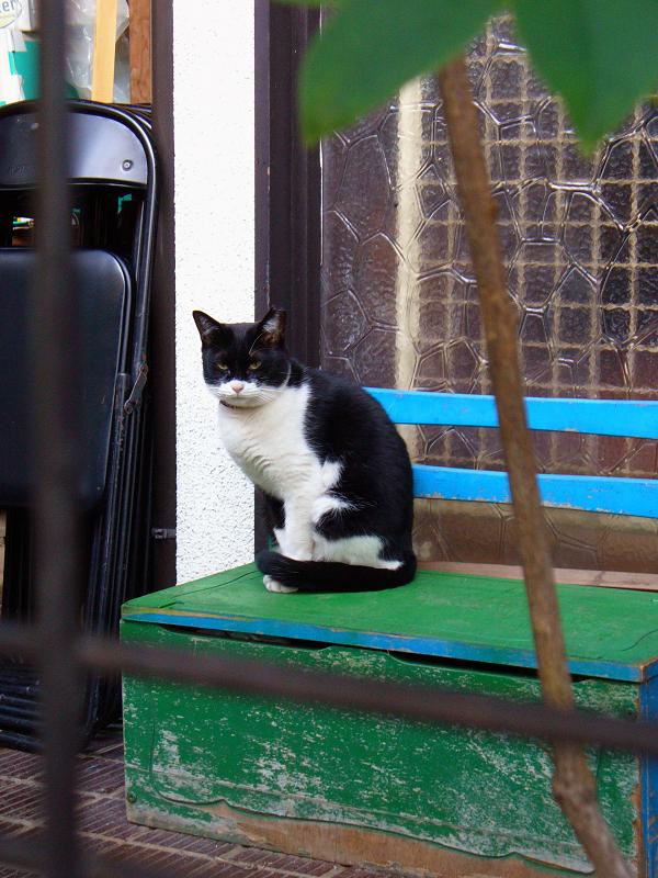 玄関先の椅子の黒白猫1
