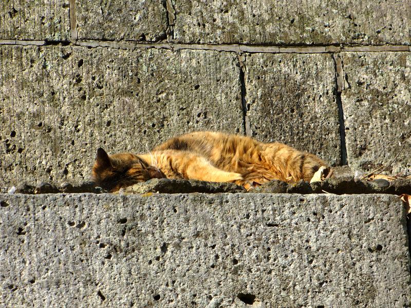 石壁とサビ猫1