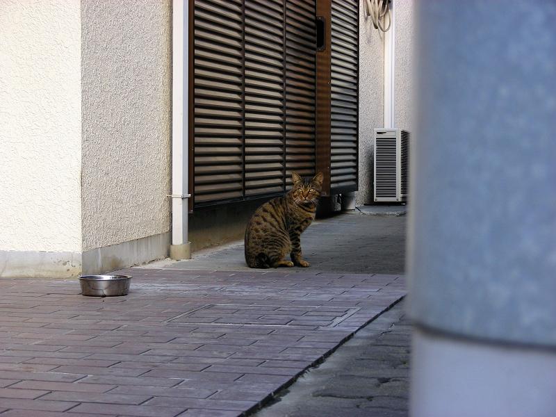 民家で食事中の猫2
