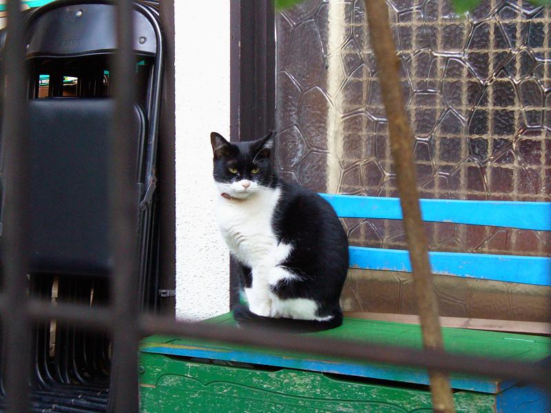 玄関先の椅子の黒白猫2
