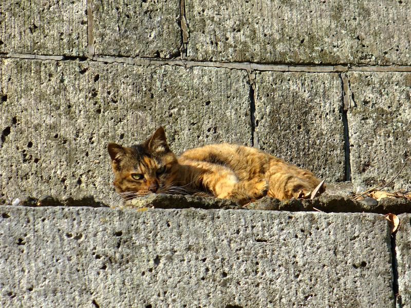 石壁とサビ猫2