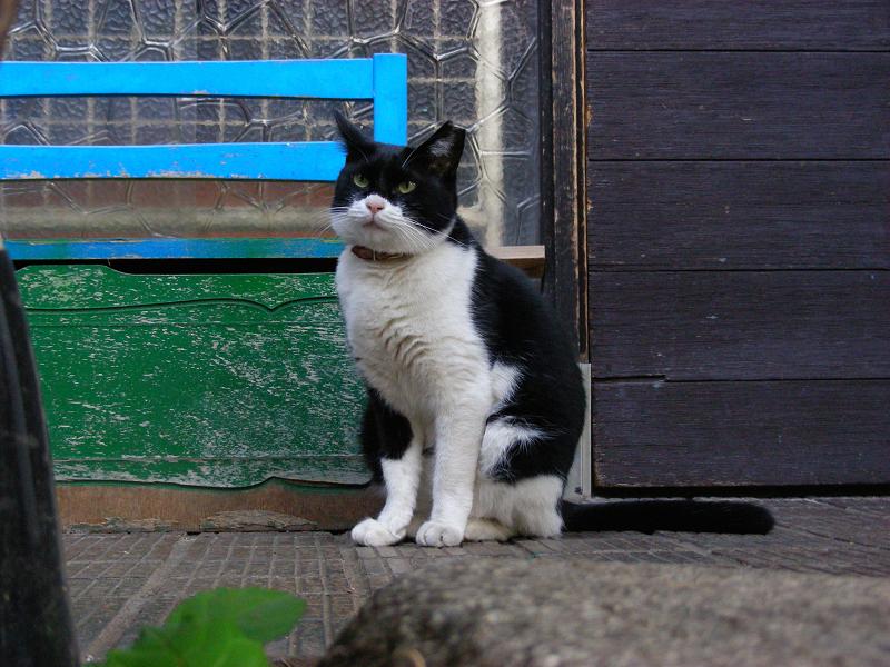 玄関先の椅子の黒白猫3