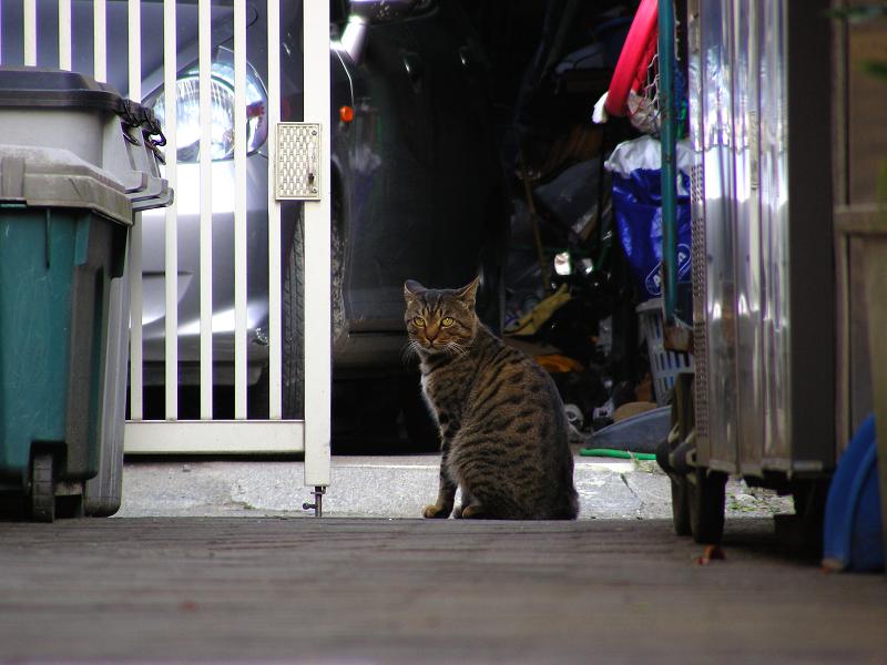 民家で食事中の猫3