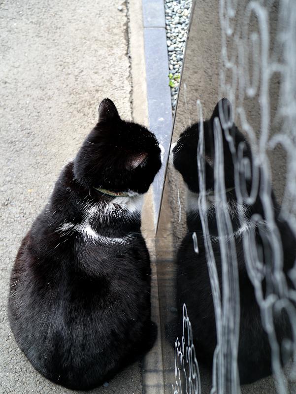 映り込んでる黒白猫1