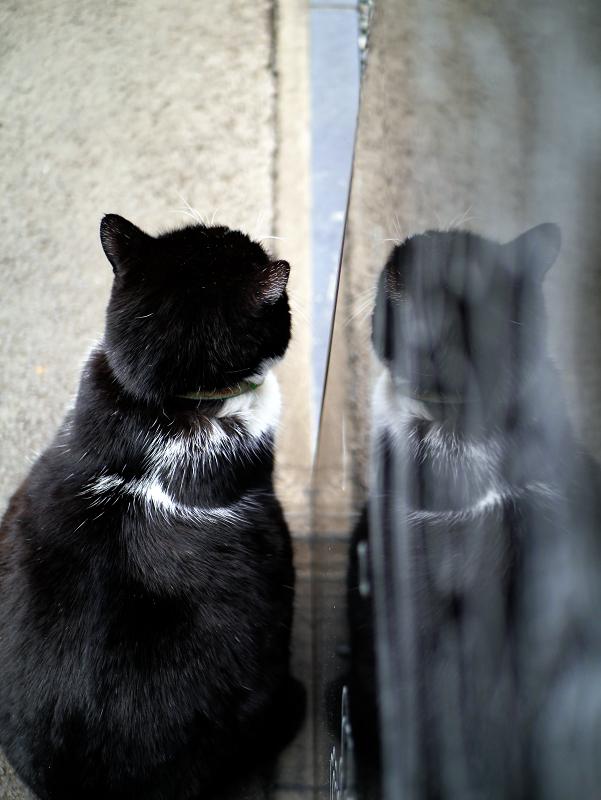 映り込んでる黒白猫2