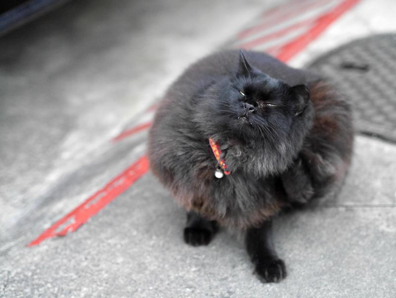 毛長の黒猫カキカキ1