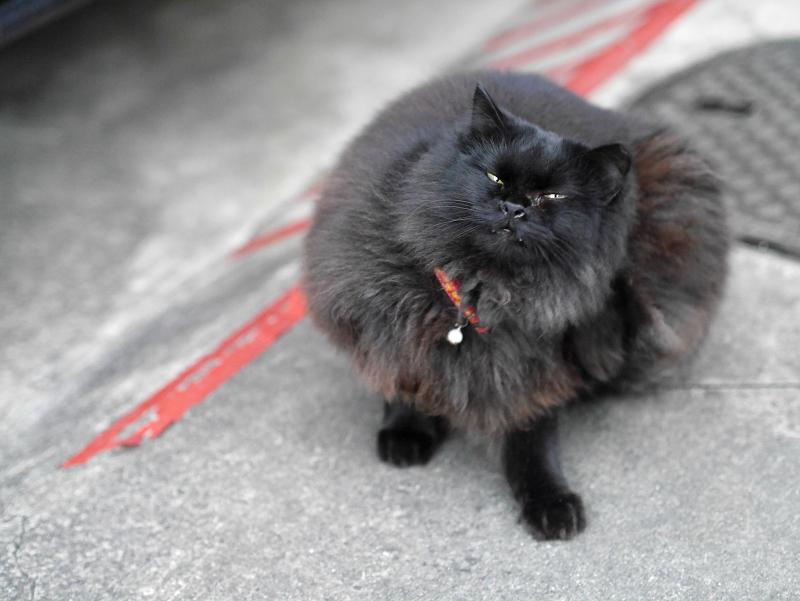 毛長の黒猫カキカキ2
