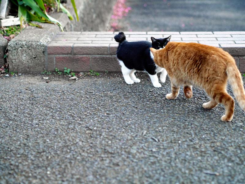 挨拶してる茶トラと黒白猫