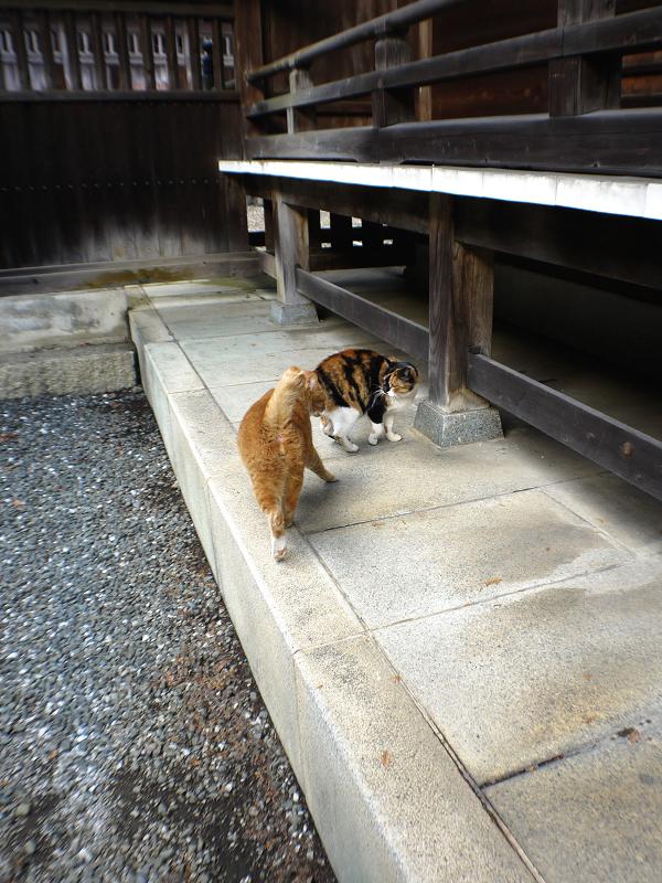 三毛猫に説教されてる茶白猫2