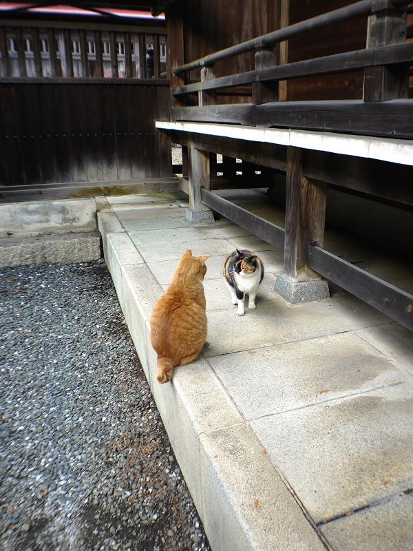 三毛猫に説教されてる茶白猫4