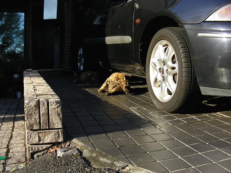 ガレージの猫たち1