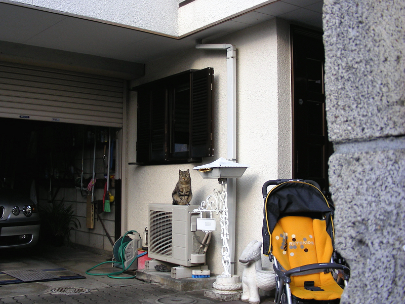 民家窓の下のキジトラ猫1
