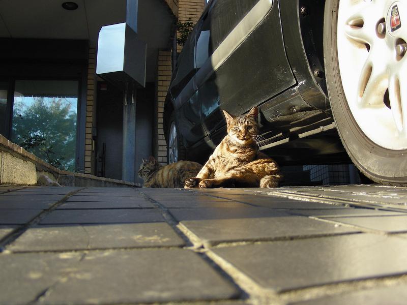 ガレージの猫たち2
