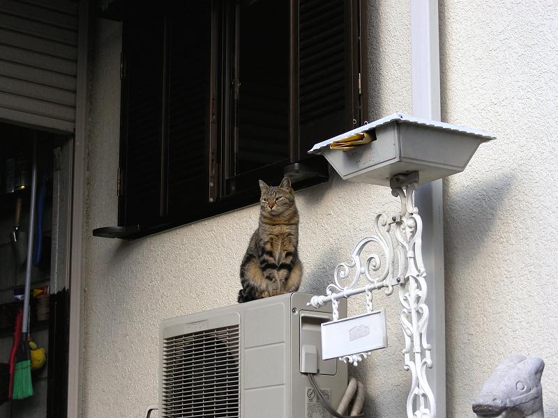 民家窓の下のキジトラ猫2