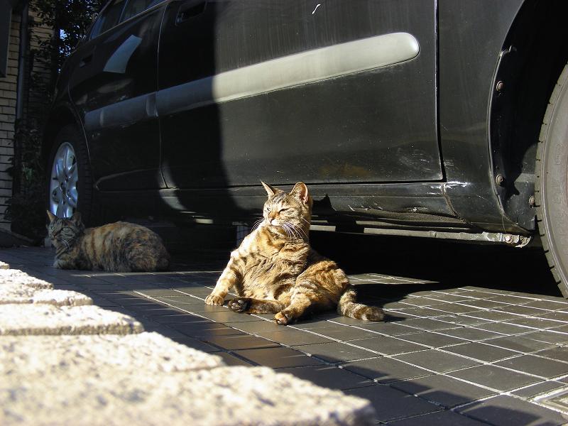 ガレージの猫たち3