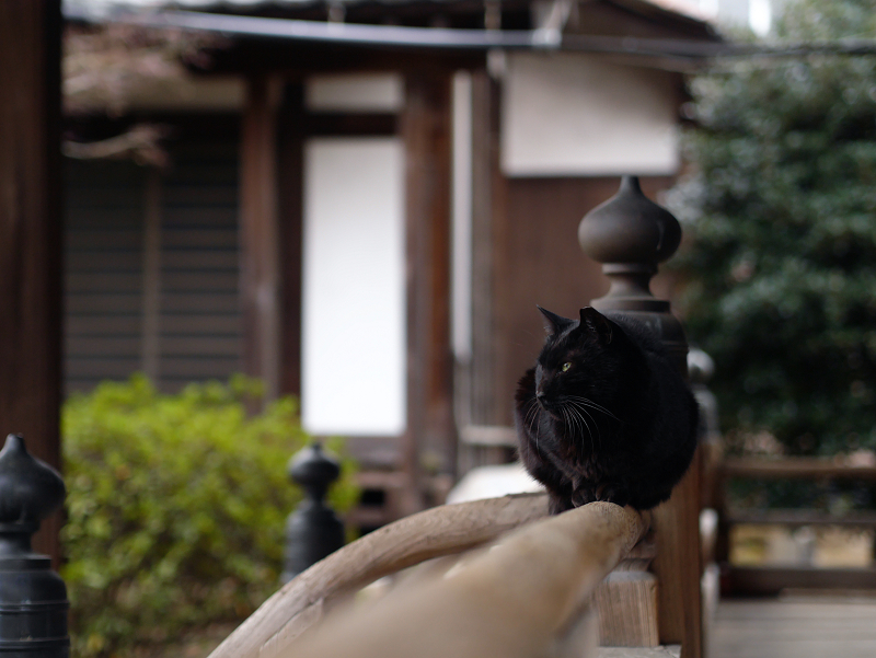 お堂欄干と黒猫1