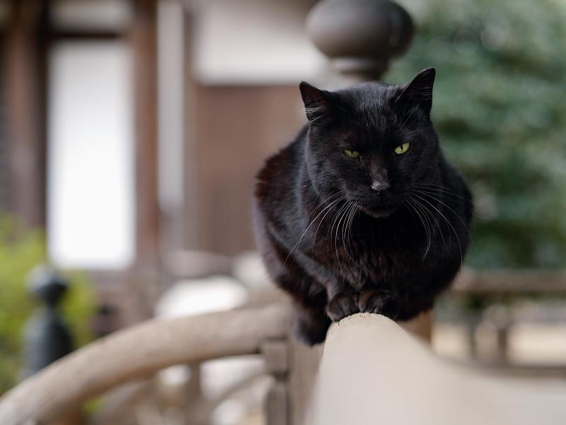 お堂欄干と黒猫2